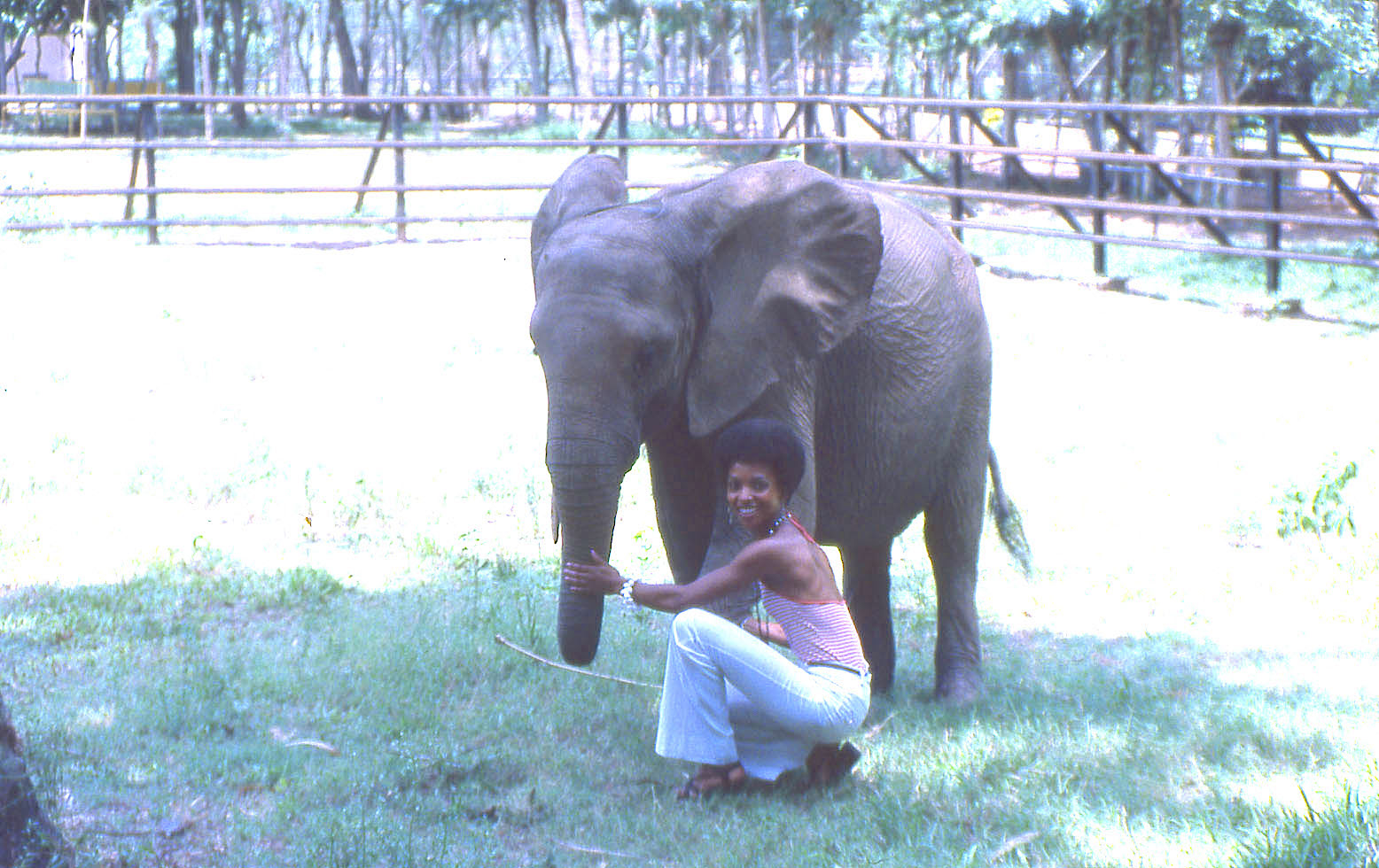 A photograph showing Golding posing with an elephant.